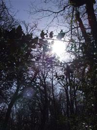 Winterlight - photo by Rachael Clyne