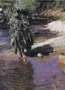 Pirpirouna / Peperouda by a stream