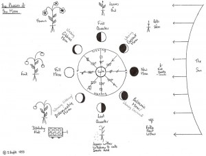 The Phases of the Moon - drawing by Sheila Rose Bright