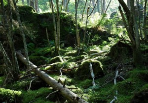 Ancient Forest at Omberg ©2014 Steve Danielsson