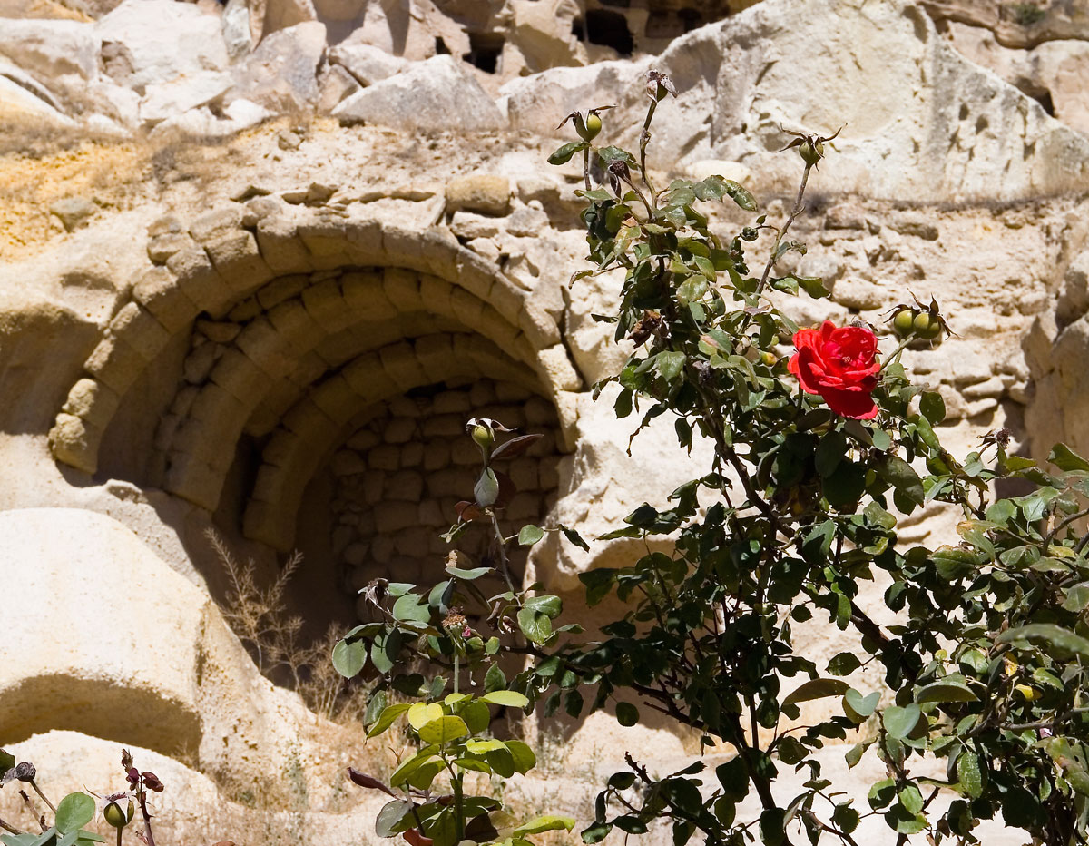 Cave with rose