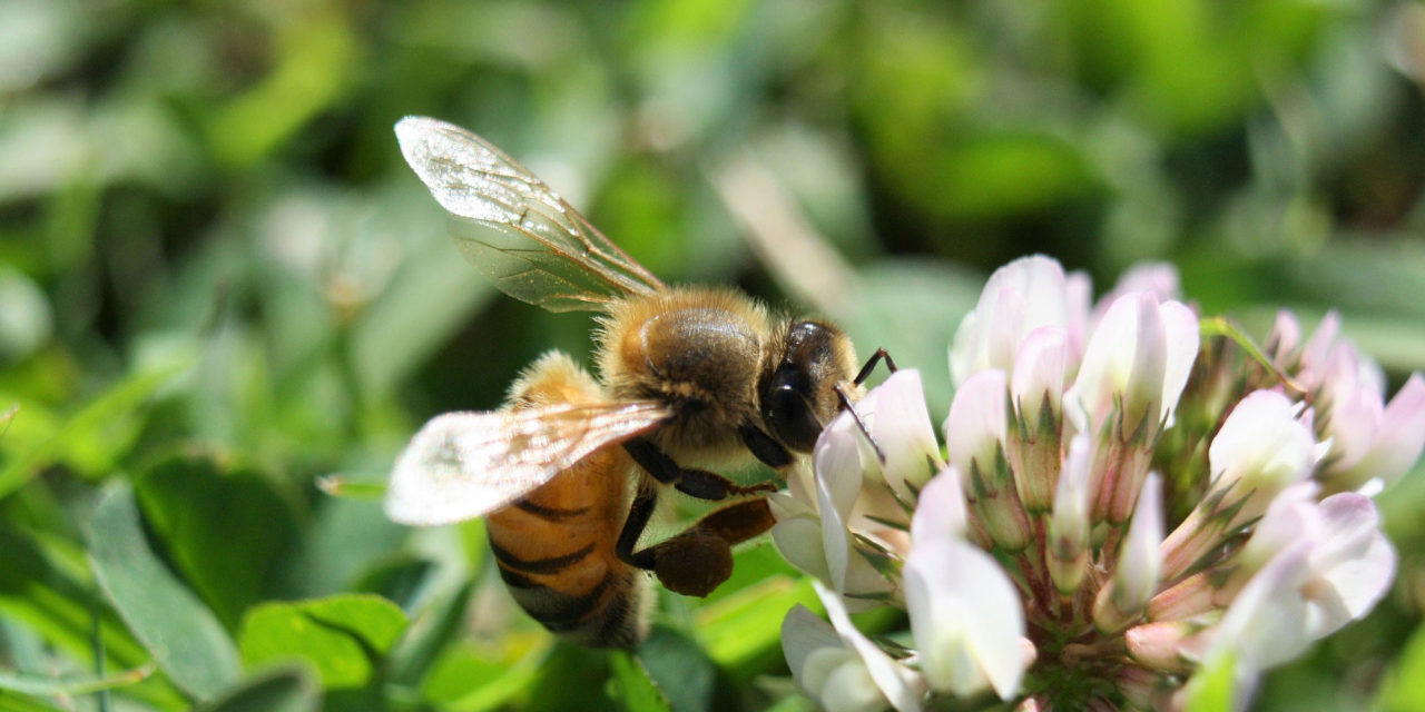 What to Do When Bees are Few