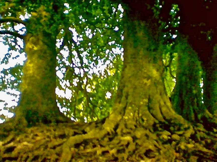 """Two Large Luminous Orbs that were inadvertently captured by my camera in this """"Spirit Filled"""" Grove"""